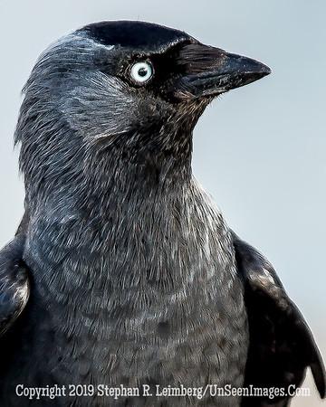 Black Bird 20130427_9493