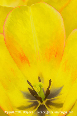 Yellow Flower 20130418_3544_orig