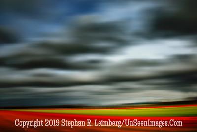 Tulip Fields Sky and Tulips RAPID PAN  20130416_2595