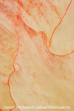 Orange Leaf _H1R2353