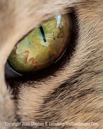 Cat Eyes 20130415_2125