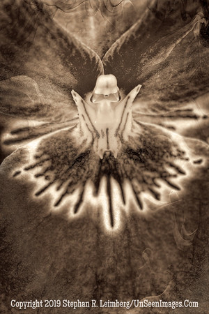 Emperor Orchid IV x B&W  20130418_3699