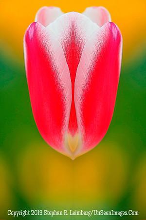 Red Flower xxx 20130422_8364