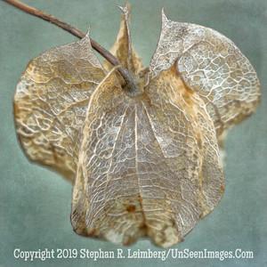 Leaf 20130415_2274