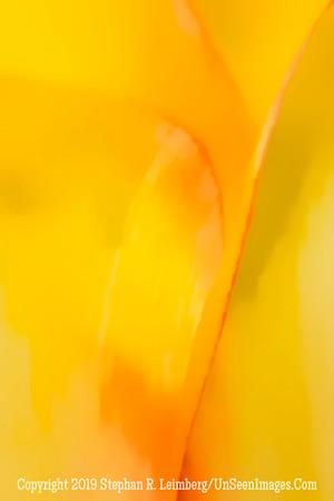 Yellow Streak x  20130418_3474