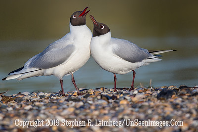 Two Gulls 20130430_0377
