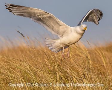 Seagull Landing 20130429_0067