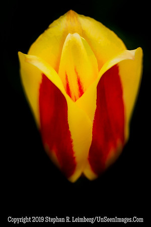 Yellow and Red 20130417_2806