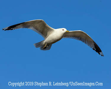 Segull Flying 20130429_0057