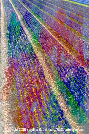 Tulip Field Blur x 20130418_4126