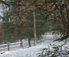 snow day-20101213-6