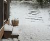 snow day-20101213-1