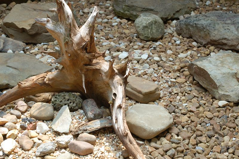 another view of the stump in the rock garden:  Aug 2005