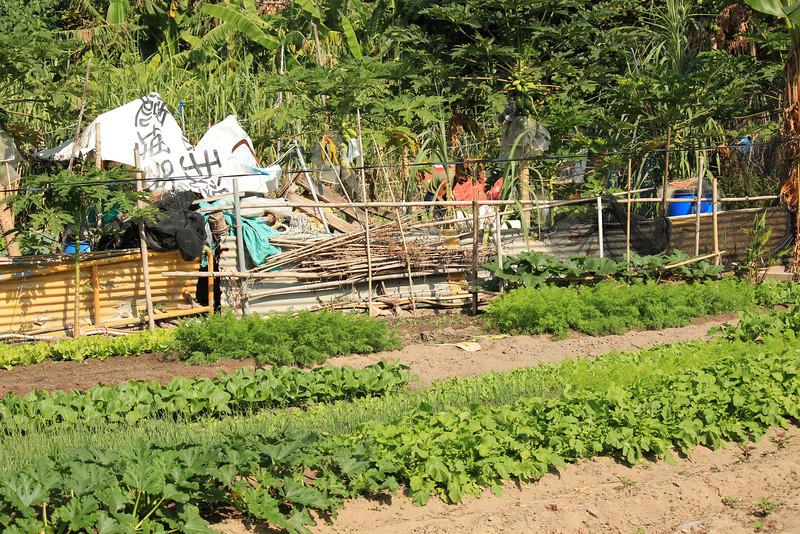 Local tending their vegetable garden Sok Kwu Wan, Lamma Island, Hong Kong