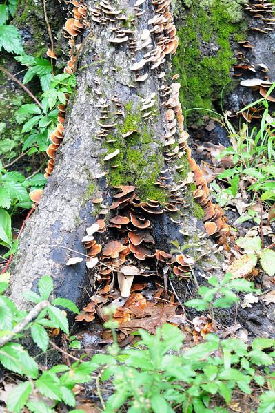 Fungi at Butterfly at Armand Bayou Nature Center