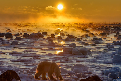 Polar Bear | Hudson Bay, CAN