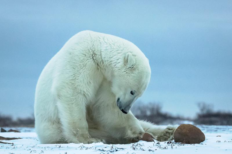 Polar Introspection