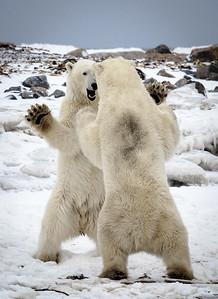 Polar High Five