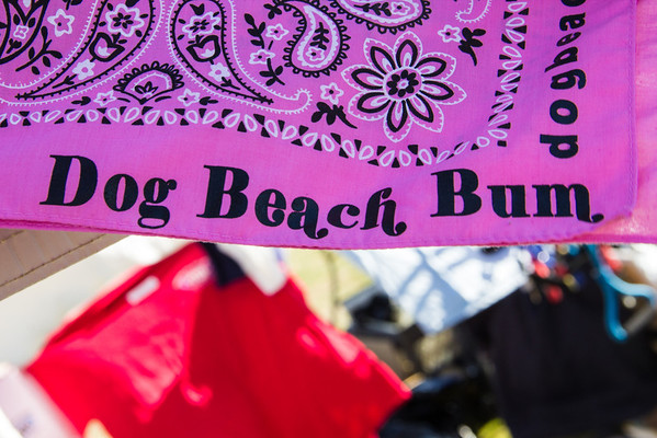 huntington-beach-dog-beach-7597