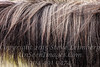 Hair of the Horse That Bit  You - Copyright 2017 Steve Leimberg - UnSeenImages Com _Z2A0772
