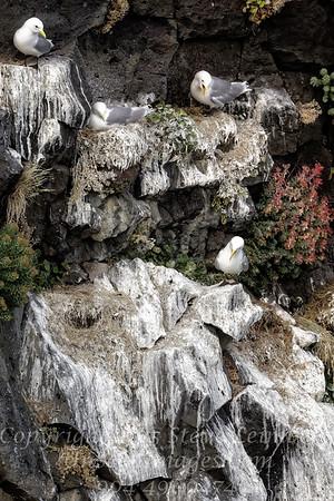 On the Rocks II - Copyright 2017 Steve Leimberg - UnSeenImages Com _Z2A1755