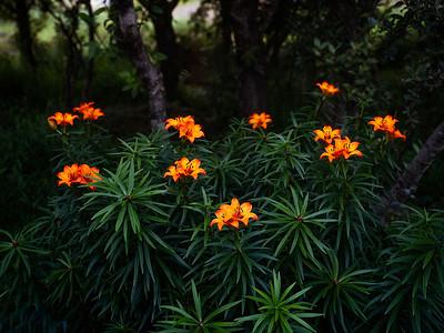 Wildfire Flowers  Iceland Copyright 20211 Steve Leimberg UnSeenImages Com _DSF1150
