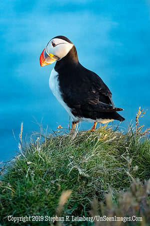 Puffin Copyright 2019 Steve Leimberg UnSeenImages Com _DSF6017