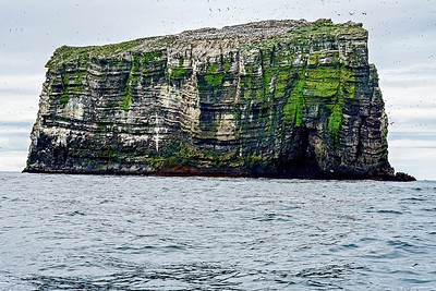 Rock with Sea Birds Iceland II Copyright 2021 Steve Leimberg UnSeenImages Com _DSC5070 copy