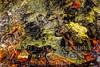 The Gates of Hell - Geyser - Copyright 2017 Steve Leimberg - UnSeenImages Com _Z2A3048