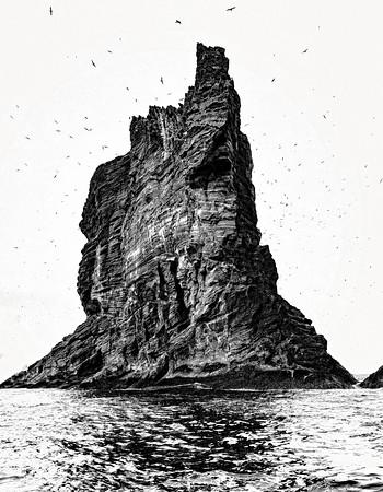 Rock and Sea Birds  Iceland - Copyright 2021 Steve Leimberg UnSeenImages Com _DSC5078 copy