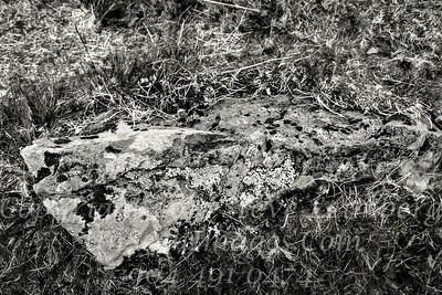 Moss on Rock - B&W Copyright 2017 Steve Leimberg - UnSeenImages Com _Z2A2272