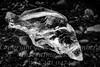 Fish on Ice II  - B&W Copyright 2017 Steve Leimberg - UnSeenImages Com _Z2A9553