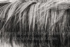 Hair of the Horse That Bit  You - B&W Painting -  Copyright 2017 Steve Leimberg - UnSeenImages Com _Z2A0772