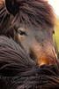 A Horse of Course - Copyright 2017 Steve Leimberg - UnSeenImages Com _Z2A0640