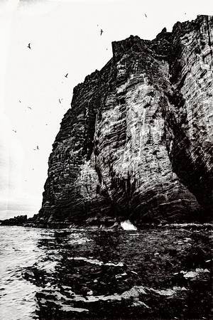 Cliffs and Birds Iceland Copyright 2021 Steve Leimberg UnSeenImages Com _DSC5036 copy