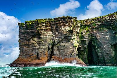 Birds on Cliffs  Iceland Copyright 2021 Steve Leimberg UnSeenImages Com _DSC4976 copy