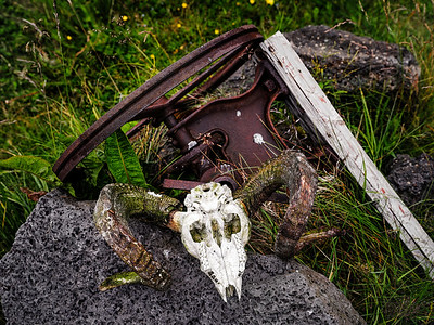 Skull Icelland Copyright 2021 Steve Leimberg UnSeenImages Com _DSF1113