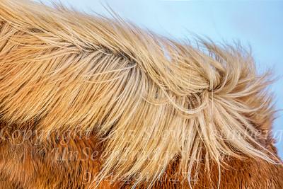 A Horse of Course - Copyright 2017 Steve Leimberg - UnSeenImages Com _DSC7672