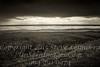 The Sea - B&W Copyright 2017 Steve Leimberg - UnSeenImages Com _DSC8323