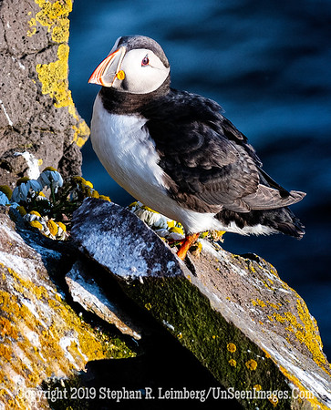 Puffin Copyright 2019 Steve Leimberg UnSeenImages Com_DSF5633