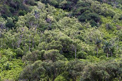 Rain forest.
