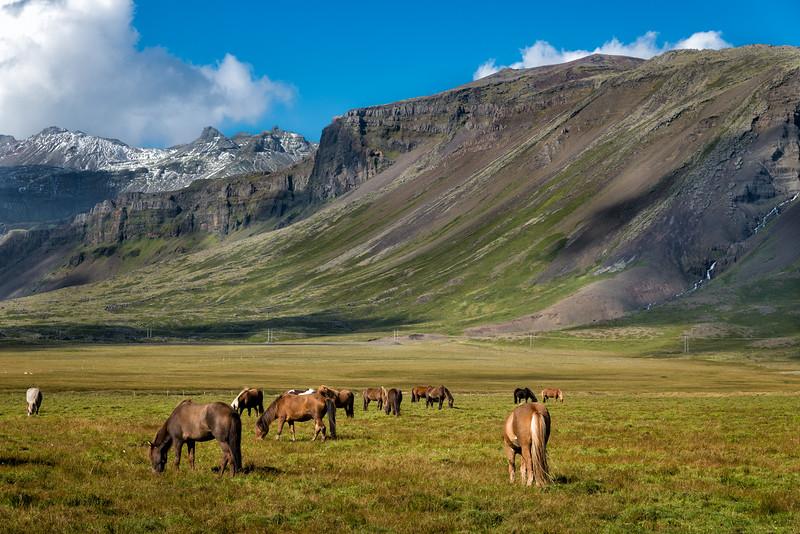 Icelandic horses, Snæfellsnes Peninsula