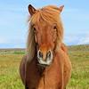 Beautiful horses everywhere