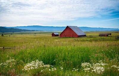 Red Barn and Queen Anne Lace
