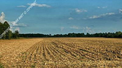 IMG_8776 Field