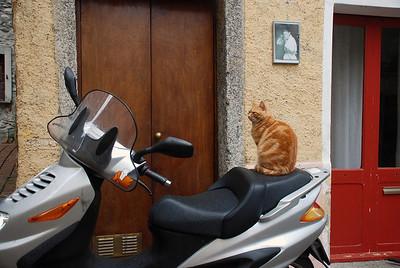 Italian biker kitty