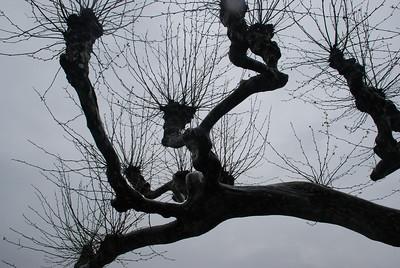 Trees at Villa del Balbianello (Lenno, Italy)