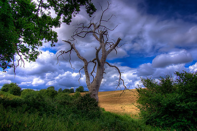 South downs - Tree on the Sussex Downland