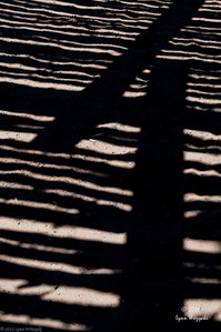 Fore Shadows