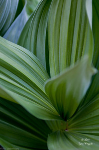 Green plants!